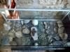 1313. الصندوق الزجاجي الذي يحوي القطع الأثرية القديمة التي وُجدت مع جثامين الكهنة تحت أرض البئر